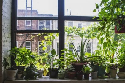 window sill gardening